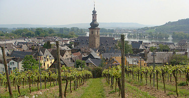 The Rheingau wine region is known for its exceptional wines, most notably Riesling. Rudesheim, Germany. Photo via Flickr:Martin Lewison