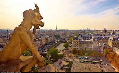 Gargoyle at Notre Dame Cathedral in Paris, France. Flickr:Moyan Brenn