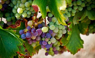 Vineyards everywhere in the Bordeaux region of France. Photo via Flickr:Peter Werkman www.peterwerkman.nl
