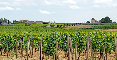 Vineyards surround Saint Emilion, France. Photo via Flickr:Dennis Jarvis
