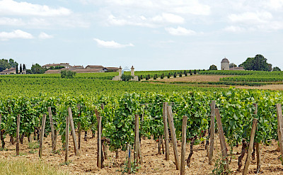 Vineyards surround Saint Emilion, France. Flickr:Dennis Jarvis