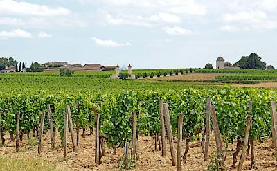 Vineyards surround Saint Emilion, France. Photo via Flickr:Dennis Jarvis