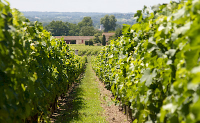 Vineyards in Saint-Émilion were planted by Romans in the 2nd century AD. Flickr:Julien Menichini