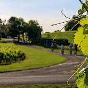 Bordeaux - Châteaux, Rivers & Wine Photo