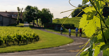 Biking past all the vineyards of the Blaye Cotes de Bordeaux! Photo via Flickr:Blaye Cotes de Bordeaux