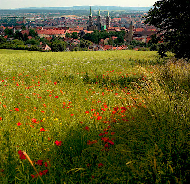 Poppies lead the biker's way to Bamberg, Germany. Photo via Flickr:Thomas Depenbusch