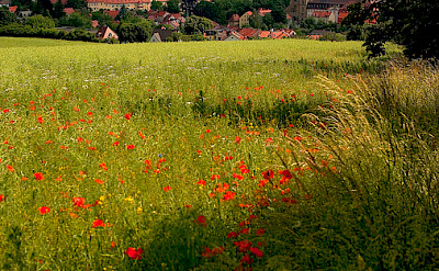 Poppies lead the biker's way to Bamberg, Germany. Flickr:Thomas Depenbusch