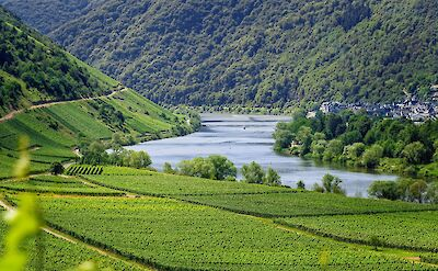 Biking & Boating along the Mosel River. ©TO