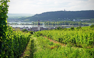 Rhine River in Rüdesheim, Germany. Flickr:Andrew Gustar