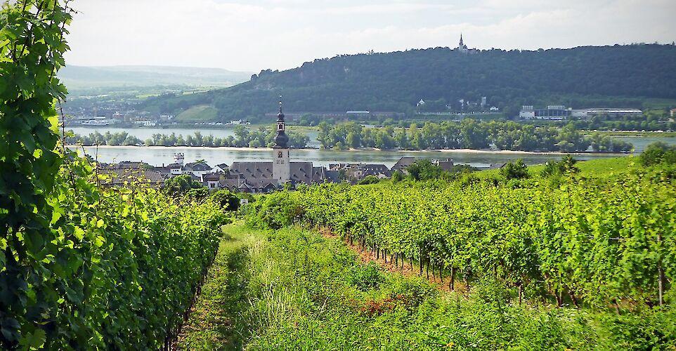 Rhine River in Rüdesheim, Germany. Flickr:Andrew Gustar