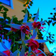 Trosa is a gorgeous little seaside town. Photo via Flickr:Micke Nordin