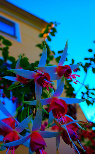 Trosa is a gorgeous little seaside town. Flickr:Micke Nordin