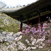 Seoul to Andong Photo