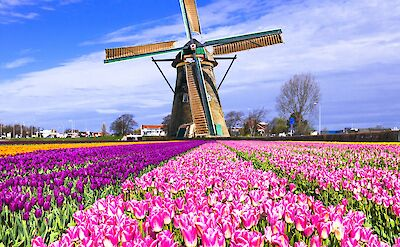 Holland is the land of windmills & tulips! Flickr:Matheus Swanson