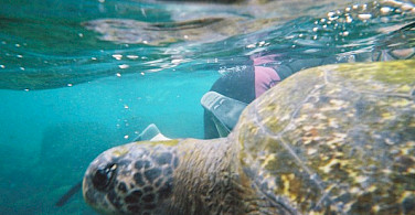 Snorkeling with sea turtles on Isabela Island, Galapagos Islands, Ecuador. Photo via Flickr:Karen Wilson