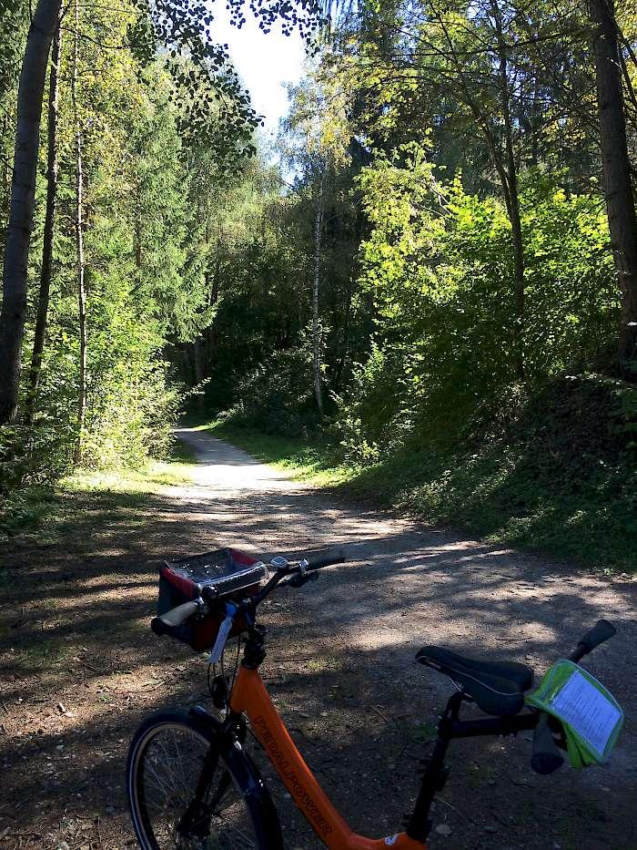 Nice wooded bike path