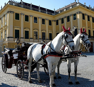 Horses await for your sightseeing tour at the Schönbrunn Palace in Vienna, Austria. Photo via Flickr:Tim Adams