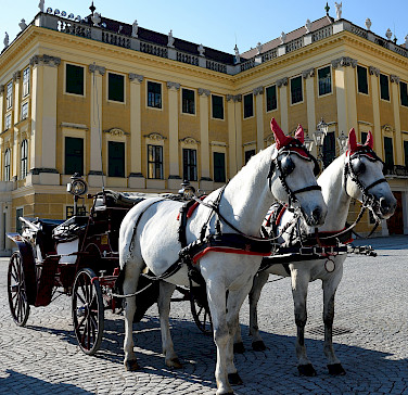 Horses await for your sightseeing tour at the Schönbrunn Palace in Vienna, Austria. Photo via Flickr:Tim Adams