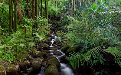 Verdant scenery along the Hamakua Coast, Hawaii. Photo via Flickr:jar [o]