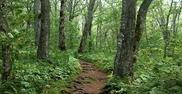 Hiking to Cape Split, Nova Scotia, Canada. Photo via Flickr: InAweofGod'sCreation