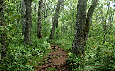 Hiking to Cape Split, Nova Scotia, Canada. Photo via Flickr: InAweofGod'sCreation