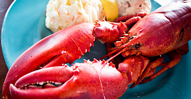 Lobster for dinner in Halifax, Nova Scotia, Canada. Photo via Flickr:Benson Kua