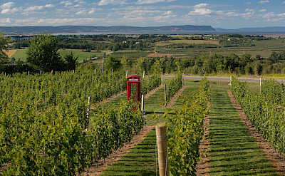 Vineyards (here Luckett) in and around Wolfville, Nova Scotia, Canada. Photo via Flickr:Gavin Langille