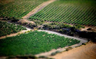 Vineyards in Haro, La Rioja, Spain. Flickr:Marcos Lomba