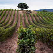 La Rioja - Land of Wine Photo