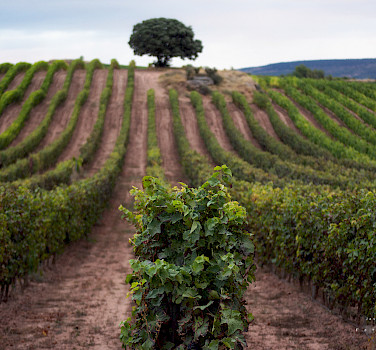 La Rioja - Land of Wine