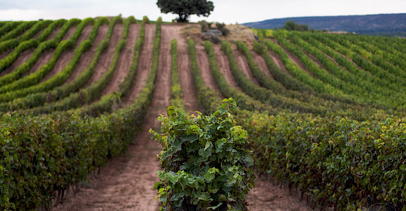 Vineyards in Rioja, Spain. Flickr:Javier Colmenero