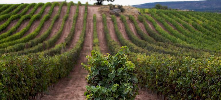 Tour: La Rioja, terra do vinho
