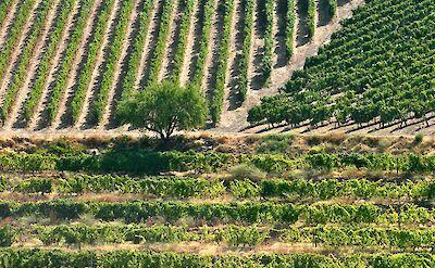 Beautiful vineyards in Portugal! Flickr:Francois Philipp