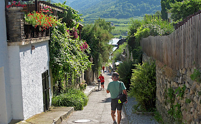 Vineyards along the Danube in Dürnstein, Wachau Valley of Austria. Flickr:Don Heffernan