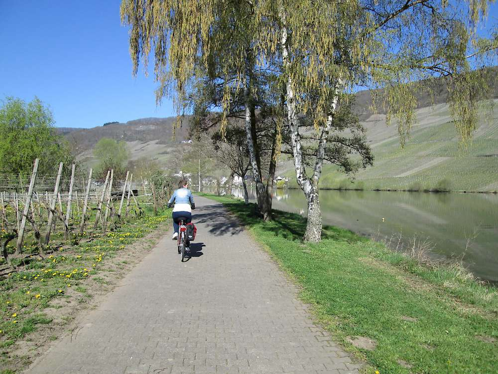 Bike path along the Mosel River