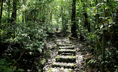 Monteverde Cloud Forest Reserve, Costa Rica. Photo via Flickr:Peter Hook
