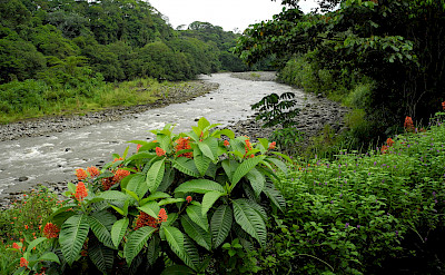 Sarapiqui River, Costa Rica. Photo via Flickr:m.prinke