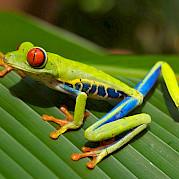 Costa Rica Foto
