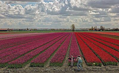 Tulip fields in South Holland! ©Hollandfotograaf