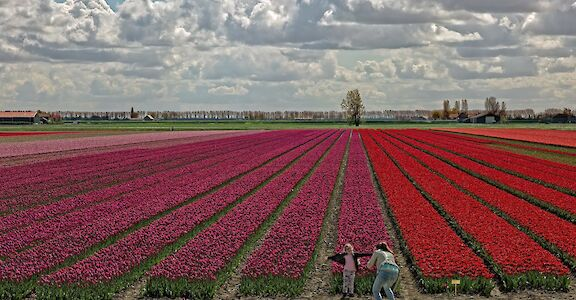 Tulip fields in the Springtime in Holland! ©Hollandfotograaf