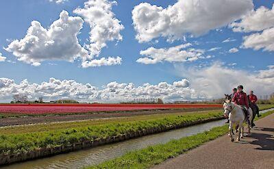 Horseback Riding and Tulip Fields in Holland! ©Hollandfotograaf