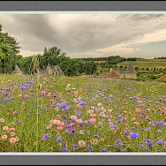 Wildflowers in Azay-le-Rideau on the Indre River, France. Flickr:@lain G