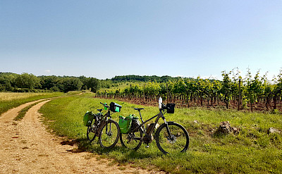 Cycling among vineyards on the Istria to the Adriatic Sea Bike Tour