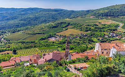 Vineyards surrounding Motovun on the Istria Peninsula, Croatia. Flickr:Arnie Papp