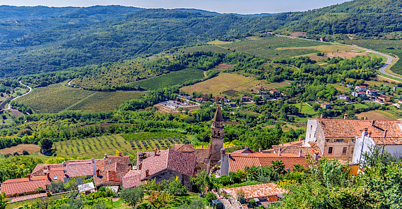 Vineyards surrounding Motovun on the Istria Peninsula, Croatia. Flickr:Arnie Papp