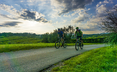 Biking past vineyards in Istria to the Adriatic through Italy, Slovenia and Croatia. Photo via TO.