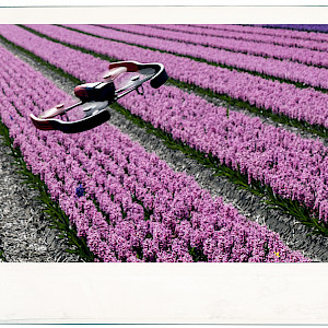 Drone among the Hyacinths