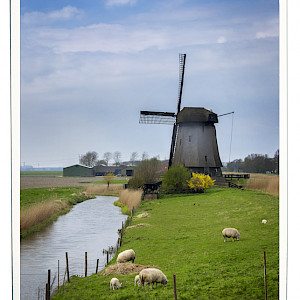 Polder with Windmill