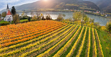 Vineyards in the famous Wachau Valley along the Danube River bike tour. Photo courtesy of Radundreisen-Eurocycle
