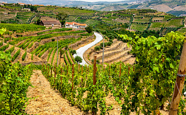Douro Valley Wine & E-Bike Tour